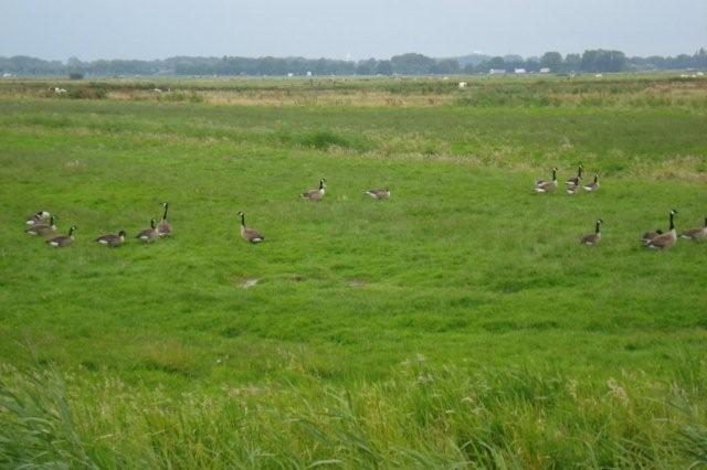 Friesland_juli_2007_066a